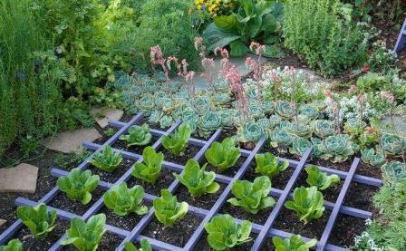 Как оформить декоративный огород?