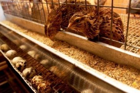 Деревянная клетка предполагает расположение кормушек за её пределами, сетчатая наоборот