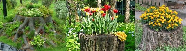 Чтобы получился горшок для цветов из пня, нужно выпилить полностью из него середину и засыпать землю