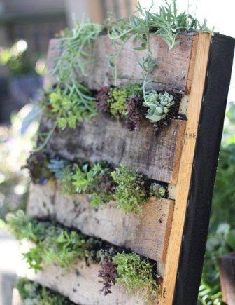 Вертикальное озеленение на даче своими руками