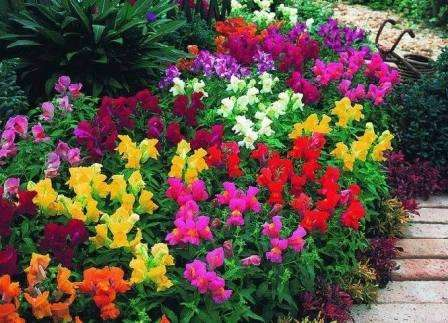 Композиции из однолетних цветов