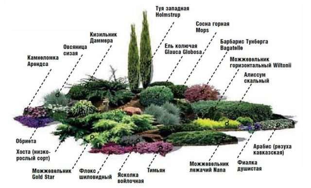 растительность для альпийской горки