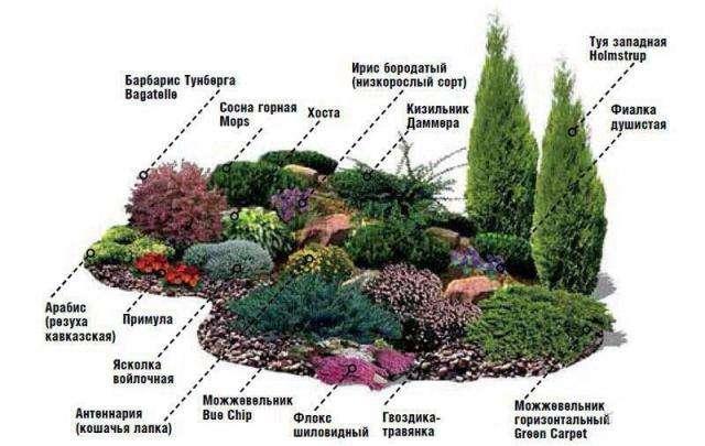 схема размещения растений в альпийской горке
