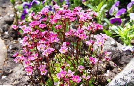 Выбираем растительность и цветы