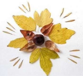 Аппликации из осенних листьев своими руками. Фото