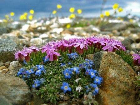 Оформление растениями альпинария