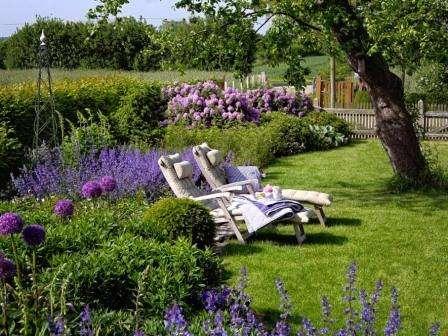 Цветы и растения для ароматного сада, клумб. Фото и названия