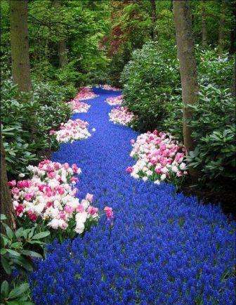 сухой ручей из цветов голубого цвета