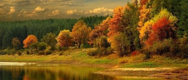 Осенние поделки своими руками из природного материала, фото МК