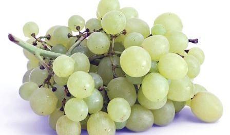 Как сушить виноград в электросушилке