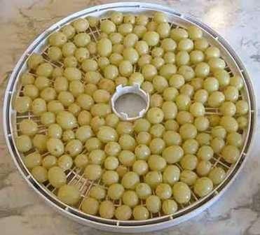 Как правильно сушить ягоды винограда в электросушилке