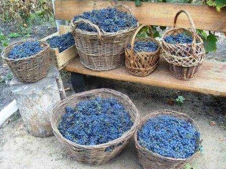 Домашнее вино. Способ приготовления: