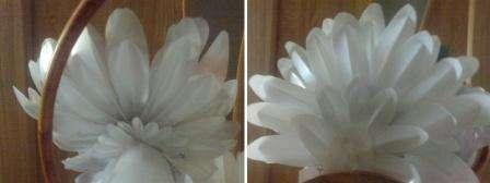 Из белой пластиковой бутылки вам нужно нарезать много перьев для хвоста голубя. Сделайте несколько видов перьев, которые потом склейте по возрастанию. Должен получиться хвост в форме веера.