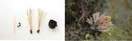 Ежика из шишек можно сделать разными способами, например, из сосновых иголок и шишек. Для этого соберите сосновые иголки