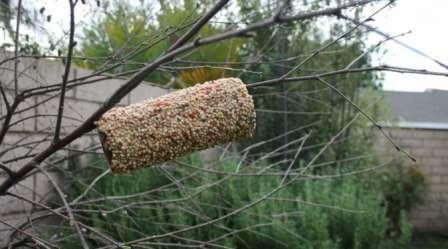 Необычные кормушки для птиц своими руками фото 743