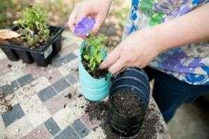 Рачительные хозяйки давно придумали способ, как сэкономить на цветочных горшках. У бутылки отрезается верх, остается удобная емкость нужной длины. Перед дачным сезоном, в такой таре прекрасно приживается рассада помидоров и огурцов, в другое время можно высаживать домашние растения.