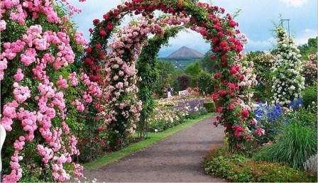 Но каким бы ни был материал основания арки, ее красота заключается вовсе не в нем, а в ее оформлении. И вот тут-то, как раз, на первое место выходит не архитектурная конструкция, а сорта цветов!