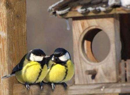 Птичьи кормушки своими руками