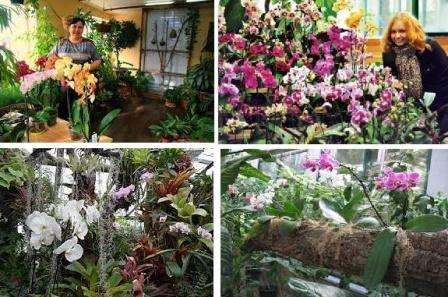 Королева любого дома – орхидея. Видов орхидей множество. Самый распространенный и неприхотливый – Фаленопсис.