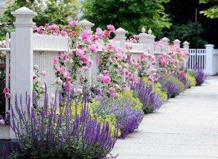 Удобрение для роз весной и летом. Чем и когда. Видео