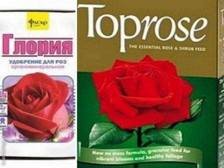 На больших участках вносить удобрение для роз можно с помощью культиватора, а для обработки одного или нескольких кустов можете просто рассеивать смесь и перемешать её с почвой возле куста.