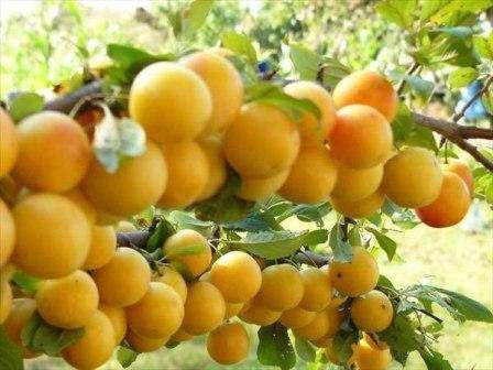 Необходимо позаботиться о поступлении всех питательных веществ и в первую очередь - азота.</p> <p> Это позволяет добиться лучшего, обильного образования цветов и последующего завязывания плодов. — Лето – осень. В это время идет активный процесс роста и развития корней дерева, начинается процесс накопления питательных веществ для зимы, будущего урожая.» width=»448″ height=»336″/></p></div> </p> <p>В момент активного развития, при вегетации растения отзывчивы на дополнительные минеральные комплексы. <br/>Выделяют следующие периоды острой необходимости плодового дерева в подкормке: <br/>— весна — лето. Необходимо позаботиться о поступлении всех питательных веществ и в первую очередь — азота.</p> <p> Это позволяет добиться лучшего, обильного образования цветов и последующего завязывания плодов. <br/>— Лето – осень.</p> <p> В это время идет активный процесс роста и развития корней дерева, начинается процесс накопления питательных веществ для зимы, будущего урожая.</p> <p>Вырастить богатый фруктовый сад можно всего за несколько лет, если своевременно удобрять деревья и правильно ухаживать за ними.</p> <p> Надеемся, что наша статья поможет вам <strong>правильно выбирать удобрения</strong> для разных деревьев.</p> </div> <div class=