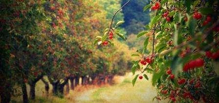 Как вырастить фруктовый сад. Удобрения. Видео