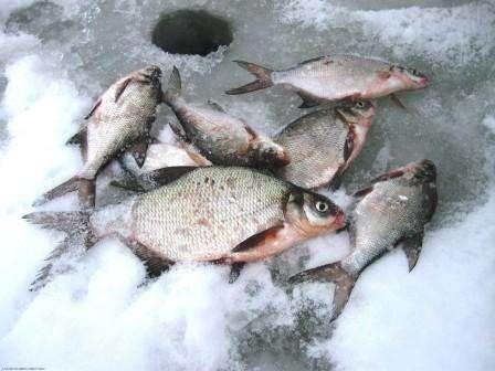 Рецепты прикормки для рыбалки своими руками фото 15