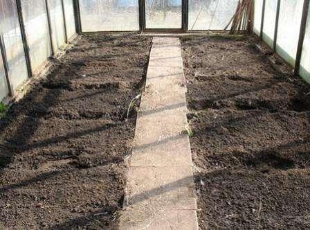 Еще один способ предполагает проведение дезинфекции почвы в теплице, после чего туда добавляется новая, самостоятельно приготовленная почвенная смесь. Для почвенной смеси используют перегной и органику, представленную пометом, навозом, опилками, торфом, песком, известняком.