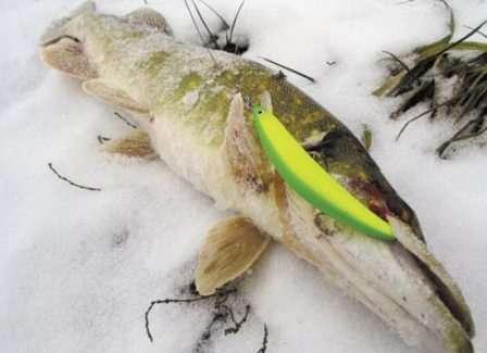 Воблеры для зимней рыбалки на судака и щуку