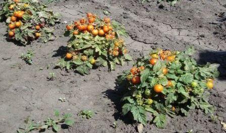 Выращивание рассад в открытом грунте 28