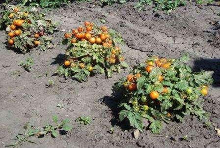 Когда выращивать рассаду в открытый грунт. Советы
