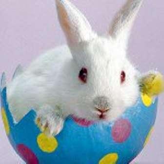 А вот в Европе, в частности в Германии и Австрии, яйца, в буквальном смысле «несёт»… кто бы вы думали? ПАСХАЛЬНЫЙ КРОЛИК