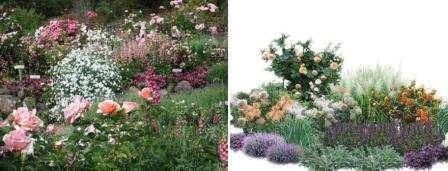 Кроме этого розы можно будет срезать в течение лета и ставить в вазу, чтобы насладиться благоуханием в собственной квартире.