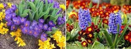 Попробуйте засадить клумбу первоцветов. Ландыши, тюльпаны, гиацинты, пролески – все эти цветы будут радовать глаз всю весну приятными ароматами и яркими красками.