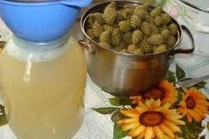 Варенье из сосновых шишек польза и противопоказания