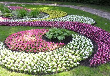 Картинки по запросу Цветы клумба