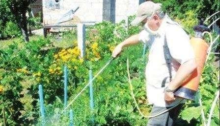 Как использовать медный купорос на даче весной