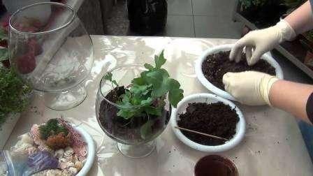 Флорариум своими руками пошаговая инструкция