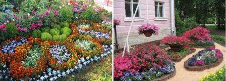Петуньи разных цветов высадите в центр клумбы, и получится красивый цветник. Оригинально смотрятся подвесные кашпо, которые можно повесить на беседке и дополнить экстерьер яркими красками.