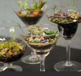 Как правило, стеклянную емкость приобретают в магазине, при этом доступ к находящимся внутри растениям может быть как вертикальным, так и фронтальным. Для фронтального варианта есть возможность смонтировать панели-купе из стекла, которые могут быть съемные.