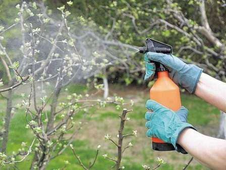 В том случае, когда признаки заболеваний деревьев и кустарников обнаружили летом, то рекомендуется провести обработку медным купоросом уже осенью, в конце октября после полного облетания листвы.