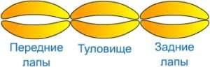 Перекрутите пузыри между 2-3 и 7-8, чтобы получилась голова.</p> <p> Первый пузырь нужно будет продеть вовнутрь головы так, чтобы второй можно было обернуть вокруг 8 и 9, тогда у тигра появится нос и рот. Перекрутите пузыри 4 и 6 и у вас получатся ушки.» width=»388″ height=»133″/></p></div> </p> <p>Чтобы сделать туловище и ноги тигра, вам понадобится еще один шарик, который нужно надуть полностью.</p> <p> Замкните концы колбаски в кольцо, потом его нужно будет сложить пополам и разделить, скручивая на три части.</p> <p><div style=