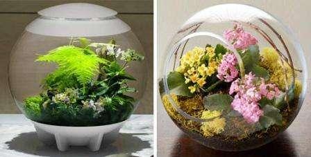 Растения, которые привлекают к себе внимание, должны присутствовать обязательно, ведь от них зависит внешний вид флоариума.