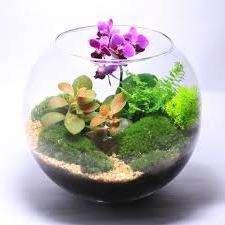 Азалия для такого вида выращивания подходит идеально её красивый пышно цветущий кустик просто преображается в флорариуме