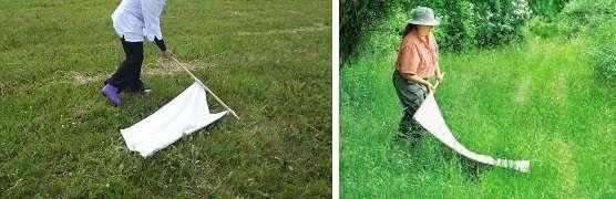 Перед тем как приступить к обработке территории от клещей, необходимо узнать, а есть ли они на вашей даче. Чтобы обнаружить насекомых не требуется специальных инструментов и навыков.