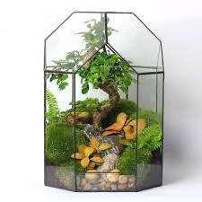 Флорариум, вне зависимости сухой он или влажный, должен гармонировать между собой и иметь подходящие по типу растения.