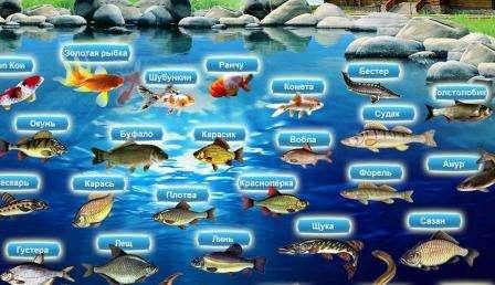 В пруд можно приобрести взрослую рыбу или мальков линя, карася, карпа, рыбки кои. Последние два вида, заселяются в небольших прудах для эстетических целей. Линь, карась, карп
