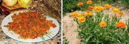По внешнему виду календула напоминает ромашку, но отличается ярким оранжевым или желтым окрасом. Этот цветок однолетний, поэтому если вы вовремя не соберете семена, они будут рассеяны по всему участку. На следующий год цветы хаотично взойдут по всему огороду