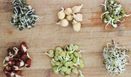 Cкарификация семян в домашних условиях.Фото и видео